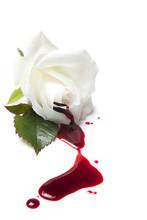 Bleeding White Rose