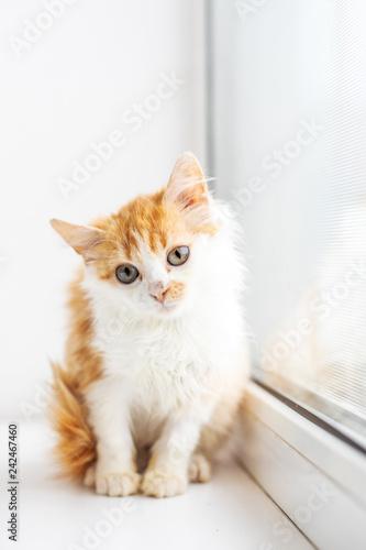 Fototapeta Funny white cat sitting on the window sill obraz na płótnie