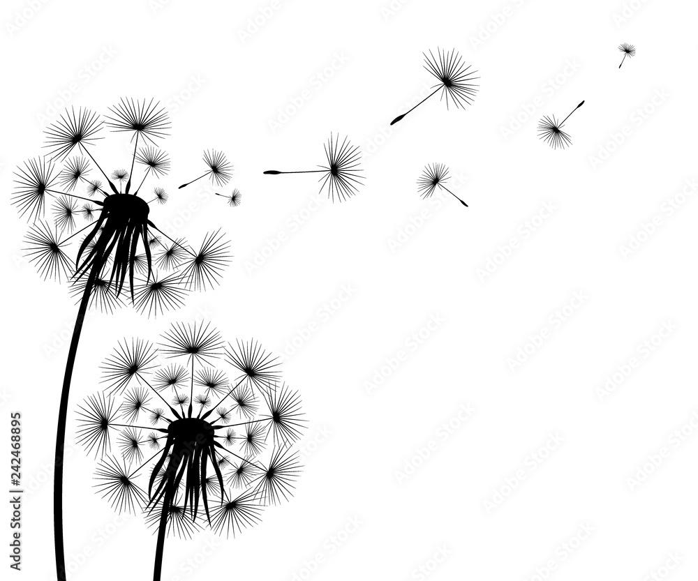 Fototapety, obrazy: Silhouette of a flowering dandelion