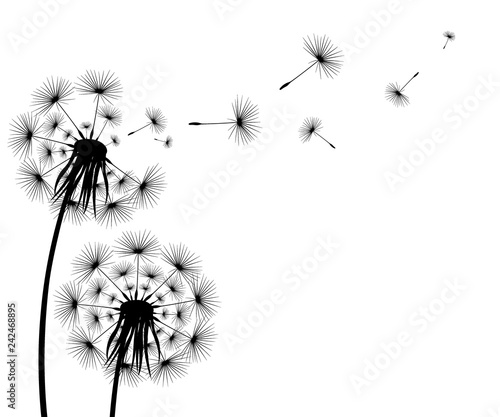Photo  Silhouette of a flowering dandelion
