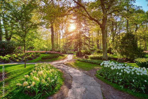 Obraz Keukenhof flower garden. Lisse, the Netherlands. - fototapety do salonu