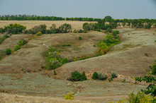The Steppe Is Woodless. Ravine...