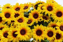 Plastic Flower Sunflower