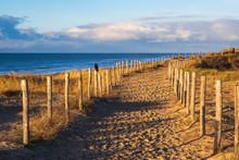 Weg Auf Den Dünen An Der Niederländischen Nordsee