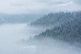 Fog covering the mountain forests in winter - 242503020