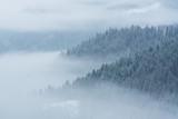 Mgła pokrywająca górskie lasy zimą - 242503020