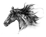 sketch side portrait of a horse profile on a white background - 242511097