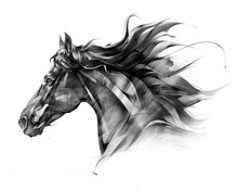 Sketch Side Portrait Of A Hors...