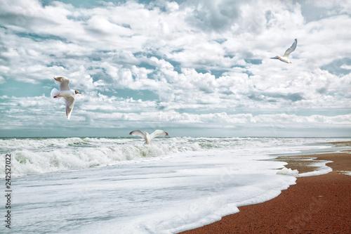 Fotografija  Möwen bei Sturm am Strand der Nordsee