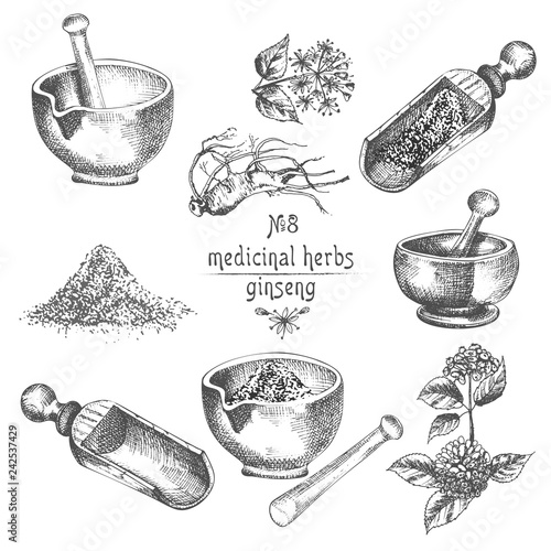 Realistic Botanical ink sketch of ginseng root, flowers, berries, bottle, mortar and pestle isolated on white background, floral herbs collection Canvas Print