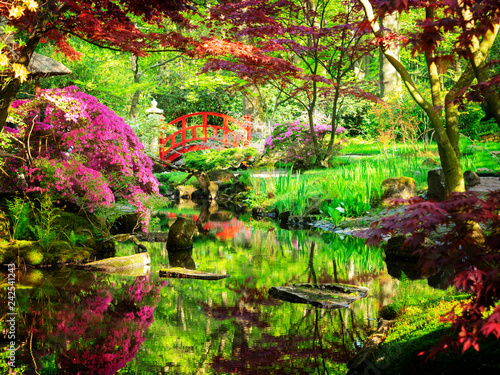 Foto op Canvas Zen japanese garden in The Hague