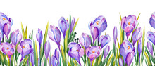 Seamless Banner With Purple Crocus Flowers. Watercolor On White Background.