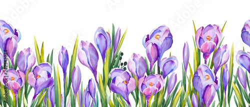 Fototapeten Künstlich Seamless banner with purple crocus flowers. Watercolor on white background.