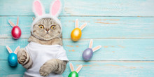 Cute Funny Cat With Rabbit Ears, Easter Background With Eggs. Banner, Top View