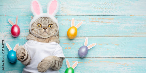 Poster de jardin Chat Cute funny cat with rabbit ears, easter background with eggs. Banner, top view