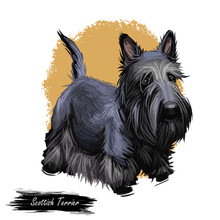 Scottish Terrier Domestic Animal Originated From Britain Scolnad Doggy Digital Art Illustration . Doggy Hand Drawn Clip Art Watercolor Portrait