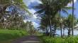 driving in jungle alongside Hawaiian beach