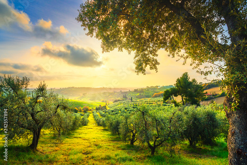 Foto op Plexiglas Olijfboom Maremma countryside panorama and olive trees on sunset. Casale Marittimo, Pisa, Tuscany Italy