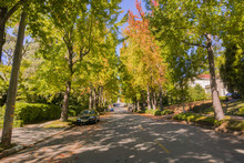 Tree-lined Street In A Residential Neighborhood On A Sunny Autumn Day, Oakland, San Francisco Bay, California