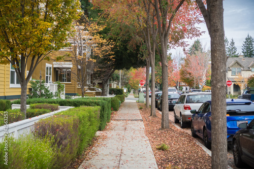 Obraz Walking through a residential neighborhood on a cloudy autumn day; colorful fallen leaves on the ground; Palo Alto, San Francisco bay area, California - fototapety do salonu