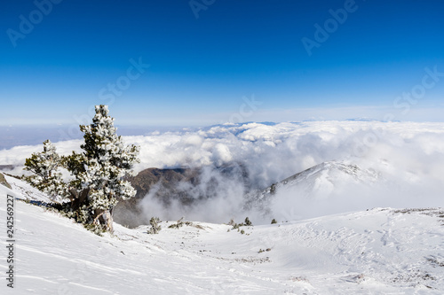 Photo Pine tree covered in frost high on the mountain; sea of white clouds in the back