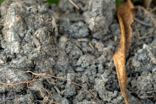 Foto  Ground with roots