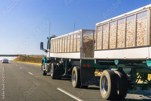 Fototapeta Truck delivering harvested onion on the interstate, California obraz