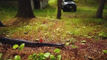 Large Adult Black Rat Snake Slithers In The Pine Needles Of Cottage Country In The Fall In Ontario Canada Slow Motion