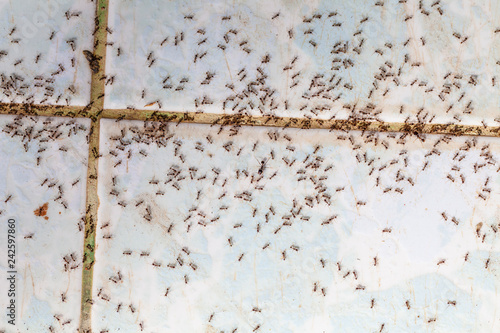 Photo Ants in house on the wall angleants walk on the tile floor.