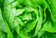 Closeup Fresh Organic Green Le...