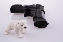 Bear Near A Gun