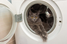The Domestic Cat Sits In The Washing Machine