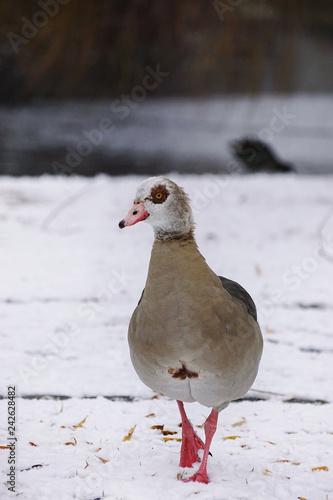 Nigans im Schnee