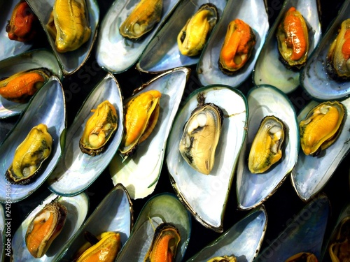 Steamed mussel on a plate