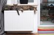 Leinwanddruck Bild - Heating Radiator and cat