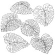 A set of exotic, white monstera leaves with a black outlines, isolated on a white background.