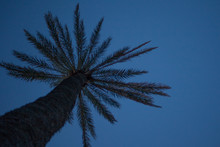Tall Palm Tree In Look Up Angl...