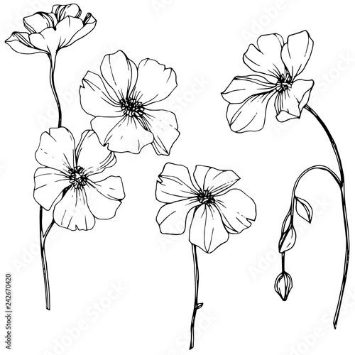 Fototapeta Vector Flax floral botanical flower. Black and white engraved ink art. Isolated flax illustration element. obraz