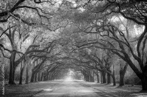 Photo Oak Drive