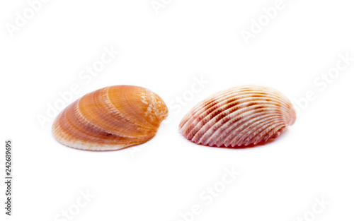 Exotic sea shells isolated on white background