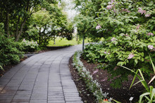 Path In The Botanical Garden
