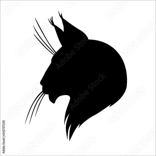 Fototapeta premium Maine coon kot sylwetka głowy