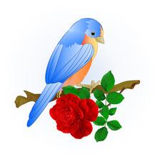 Small Songbirdon Bluebird  Thrushand Red Rose Spring Background Vintage Vector Illustration Editable Hand Draw