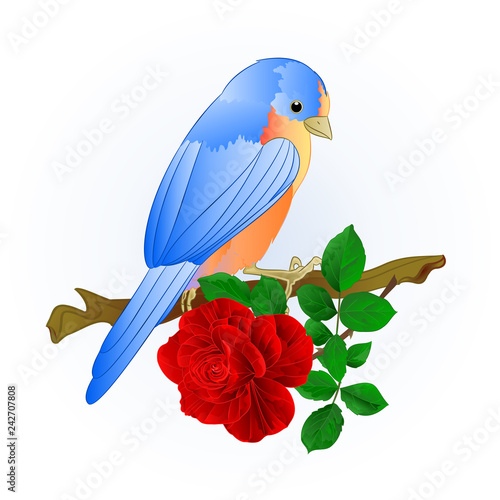 Small songbirdon Bluebird  thrushand red rose spring background vintage vector i Tapéta, Fotótapéta