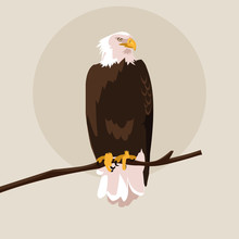 Bald Eagle Bird In The Branch