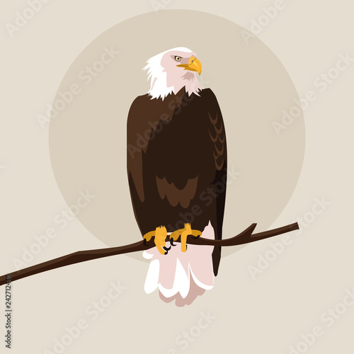 Valokuva bald eagle bird in the branch