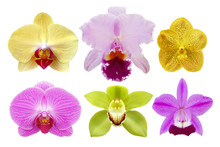 Different Exotic Orchid Flowers Isolated On White Background