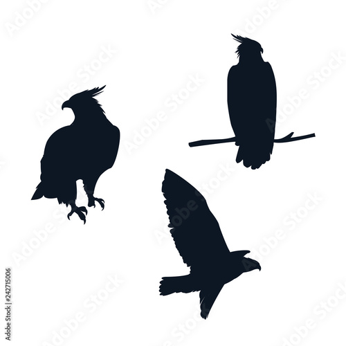 Canvas Prints Owls cartoon hawks birds silhouettes with different poses