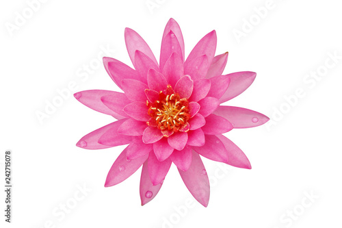 Autocollant pour porte Nénuphars Blooming Pink Water Lily Flower Isolated on White Background