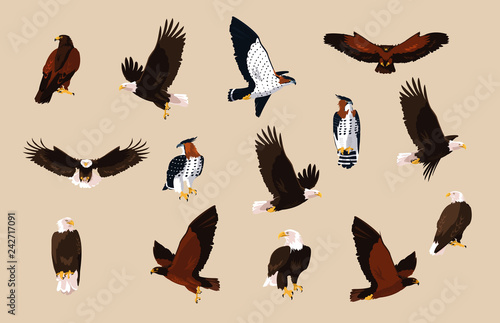 Valokuvatapetti hawks and eagles birds with different poses